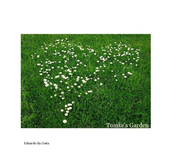 Tomke's Garden