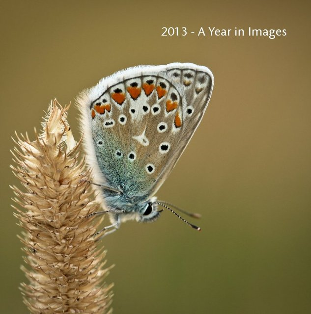 2013 - A Year in Images