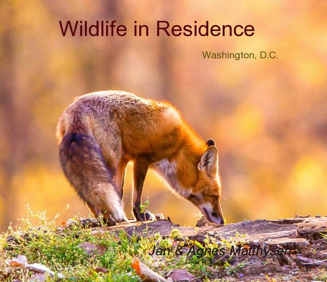 Wildlife in Residence