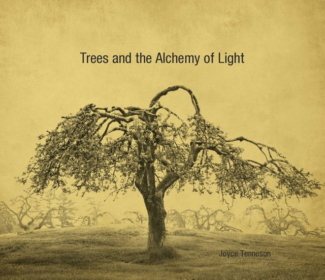 Trees and the Alchemy of Light