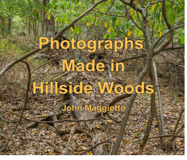 Photographs Made in Hillside Woods