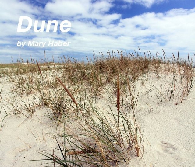 Dune by Mary Haber