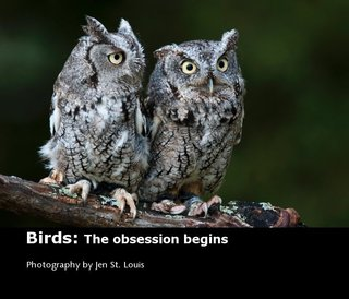 Birds: The obsession begins