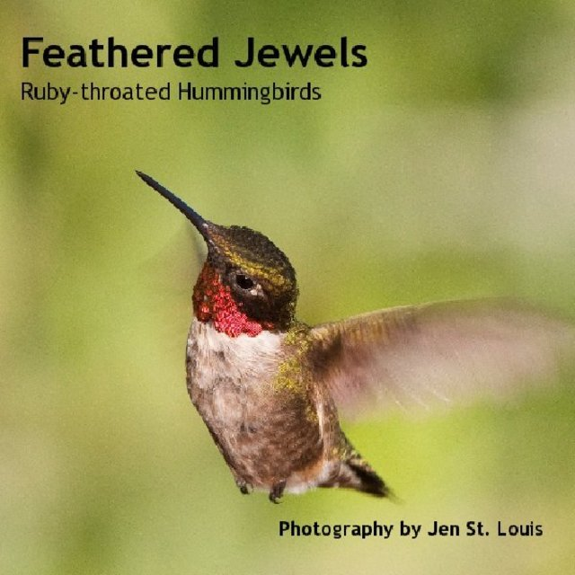 Feathered JewelsRuby-throated Hummingbirds