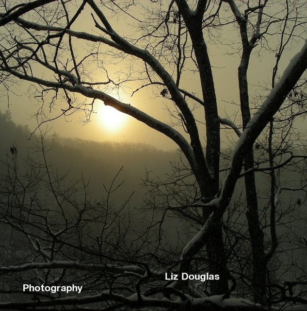 Liz Douglas Photography