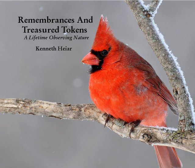 Remembrances And Treasured Tokens A Lifetime Observing Nature