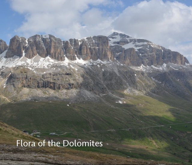 Flora of the Dolomites