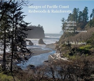 Images of Coastal Redwoods & Rainforests