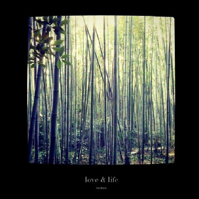 Love & Life