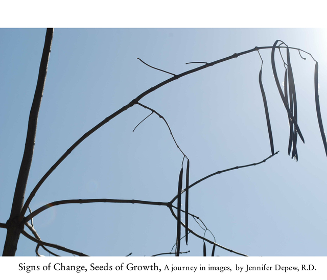 Signs of Change, Seeds of Growth: