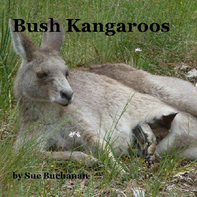 Bush Kangaroos