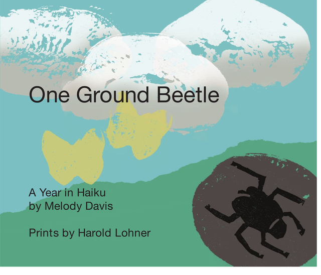 One Ground Beetle