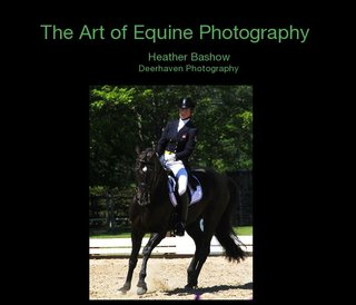 The Art of Equine Photography