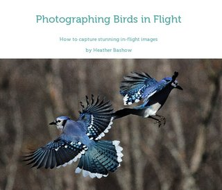 Photographing Birds in Flight