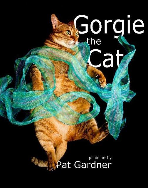 Gorgie the Cat