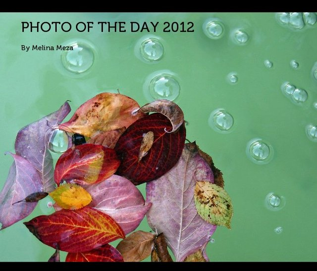 Photo of the Day 2012
