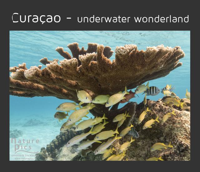 Curaçao - underwater wonderland