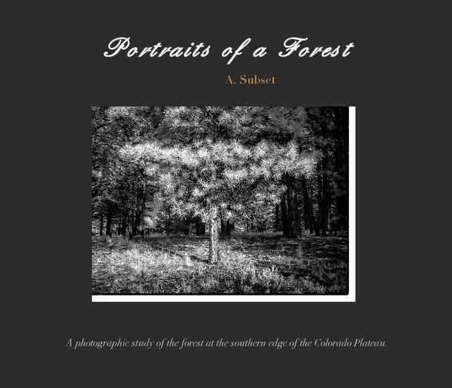 Portraits of a Forest