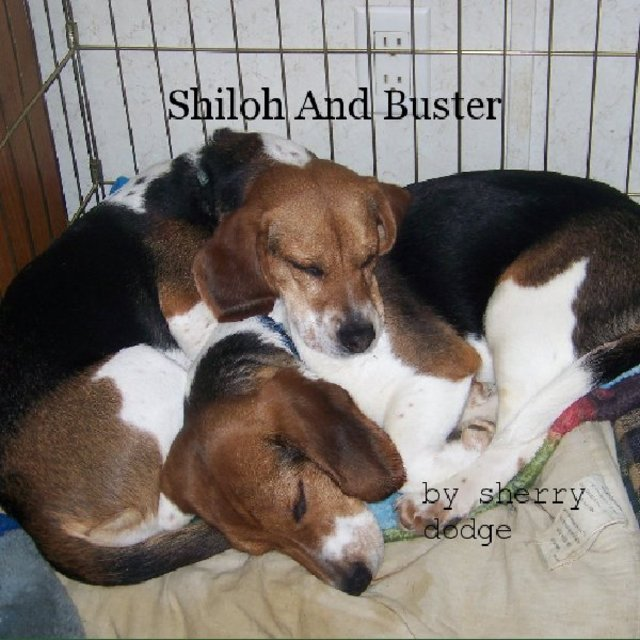 Shiloh And Buster