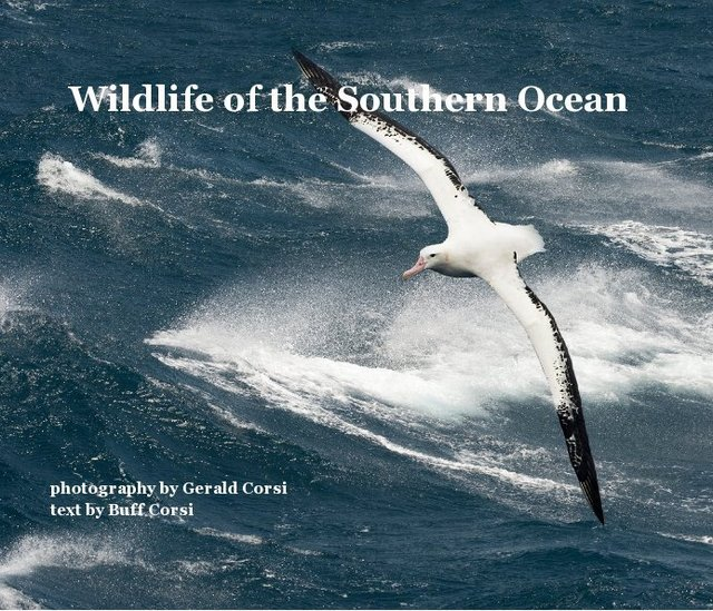 Wildlife of the Southern Ocean