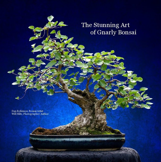 The Stunning Art of Gnarly Bonsai