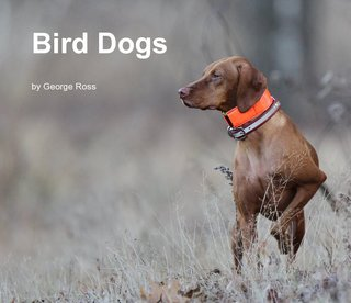 Bird Dogs