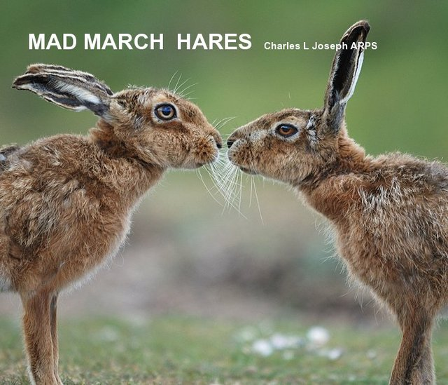 MAD MARCH HARES Charles L Joseph ARPS
