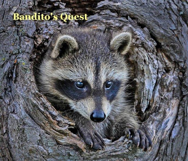 Bandito's Quest