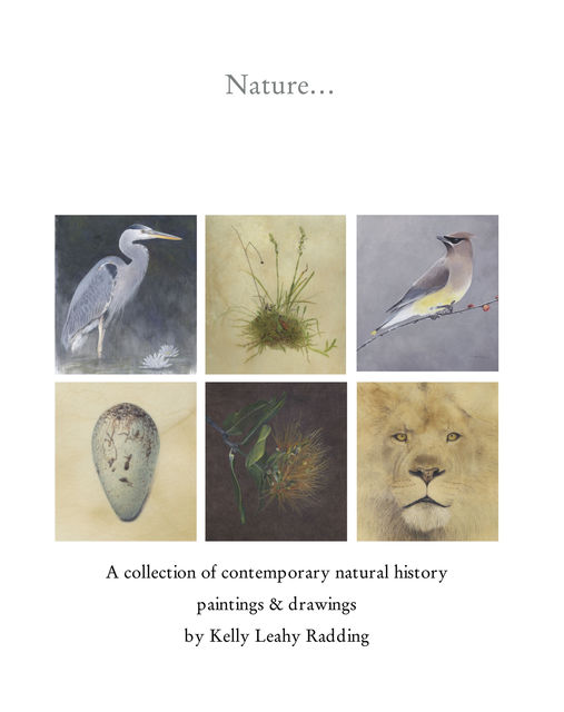Nature… A collection of contemporary natural history  paintings & drawings by Kelly Leahy Radding