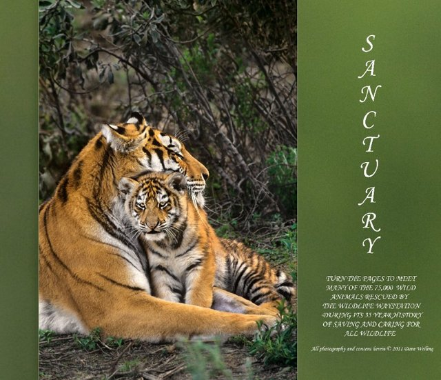 Sanctuary Large Format Coffee Table book