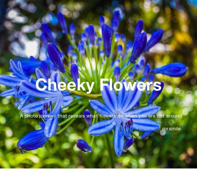Cheeky Flowers