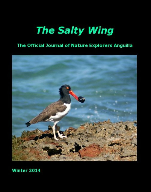The Salty Wing Winter 2014