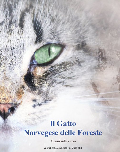 Il Gatto Norvegese delle Foreste