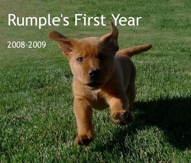 Rumple's First Year 2008-2009