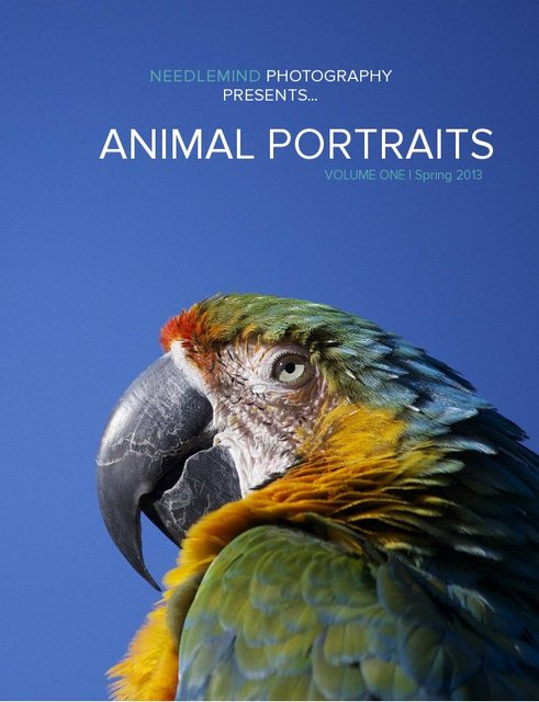Needlemind Photography Presents... Animal Portraits