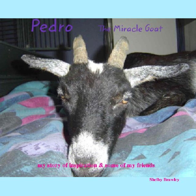 Pedro The Miracle Goat