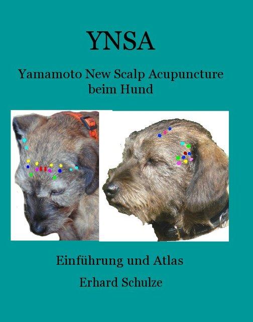 YNSA in English