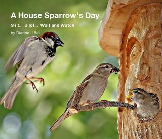 A House Sparrow's Day