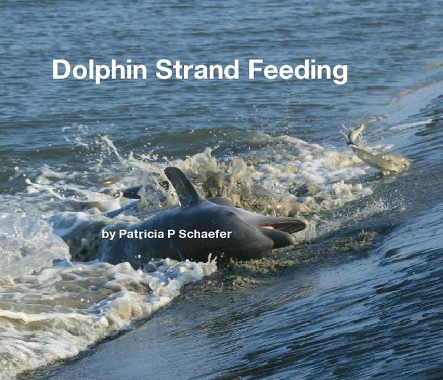 Dolphin Strand Feeding by Patricia P Schaefer