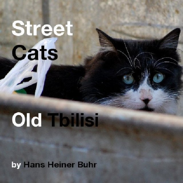 Street Cats Old Tbilisi