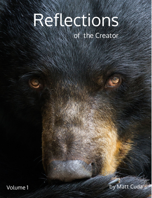 Reflections of the Creator