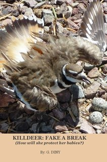 KILLDEER: FAKE A BREAK (How will she protect her babies?)