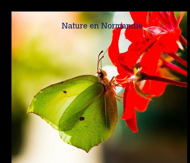 Nature en Normandie 2013 n°2