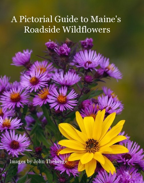 A Pictorial Guide to Maine's Roadside Wildflowers