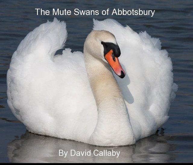 The Mute Swans of Abbotsbury