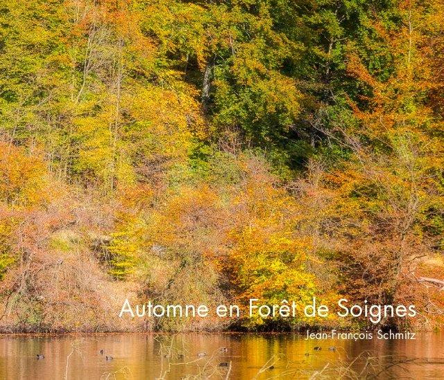 Automne en Forêt de Soignes