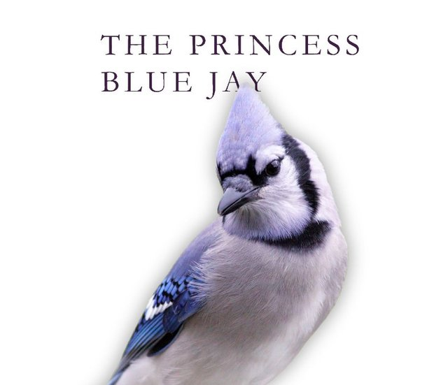 princess blue jay