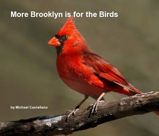 More Brooklyn is for the Birds
