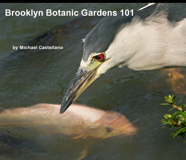 Brooklyn Botanic Gardens 101