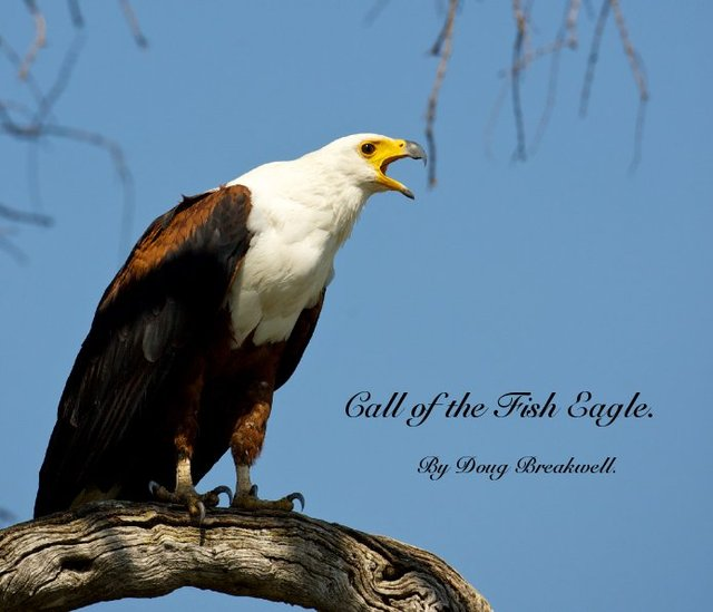 Call of the Fish Eagle.